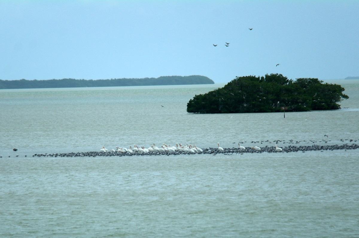 20 uitzicht op Florida Bay bij het Flamingo Visitor Center