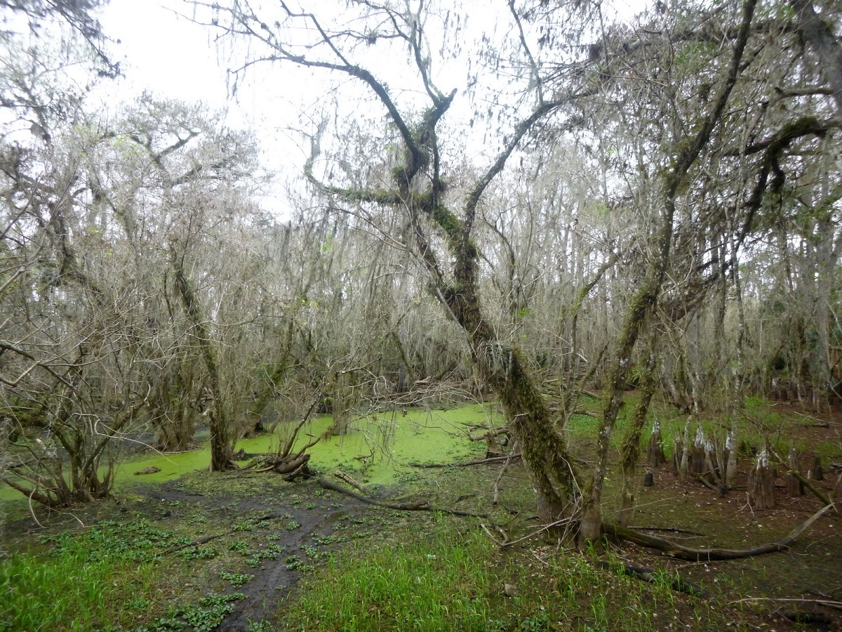 26 Cypress Swamps