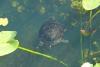 12 schildpad