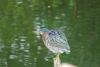 44 prachtige vogel op de uitkijk