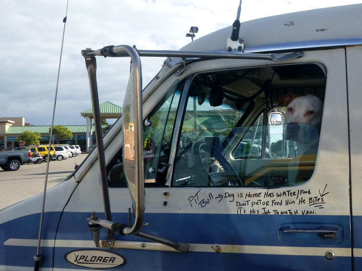 """11 """"hier waak ik"""", dog is home... Even later spreken we de beide eigenaars een leuke ontmoeting, zij reizen 3 maanden door Amerika"""