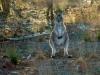 05-en-een-nieuwsgierige-kangoeroe