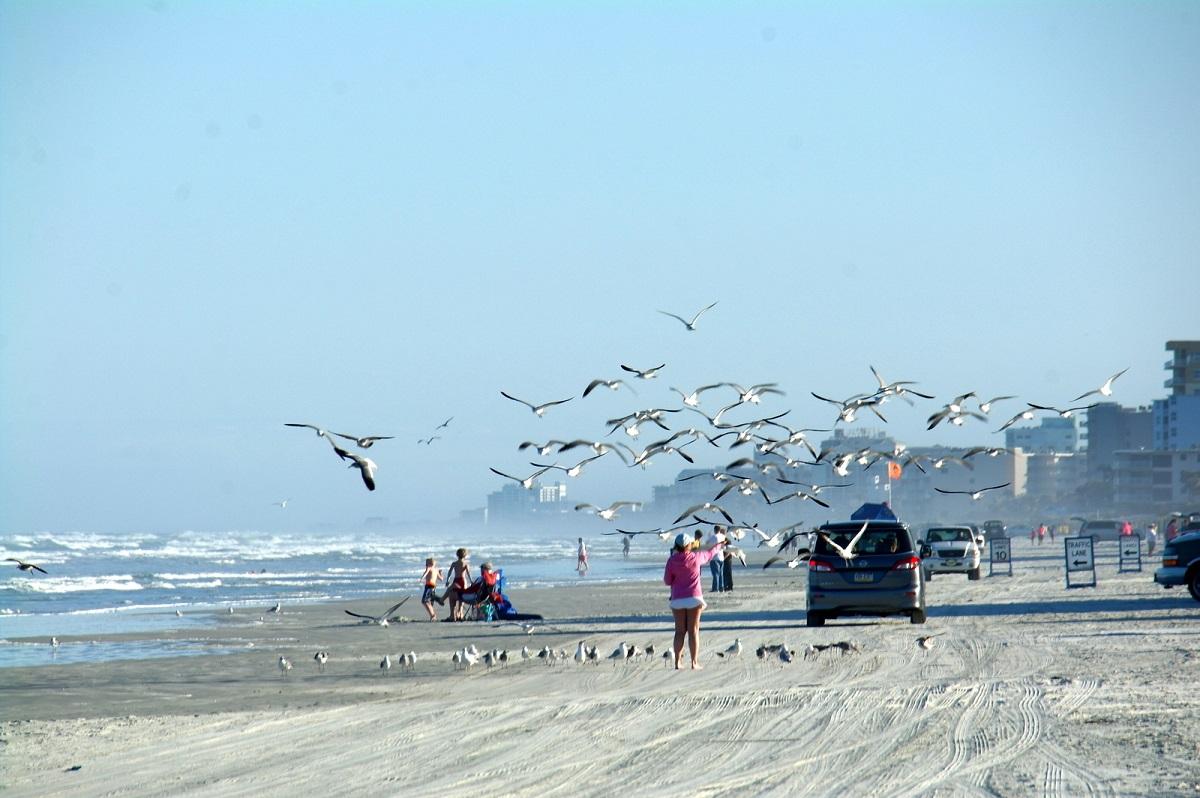 20 drukte op het strand, meeuwen die altijd in zijn voor een extraatje, en tegen betaling met je auto op het strand rijden
