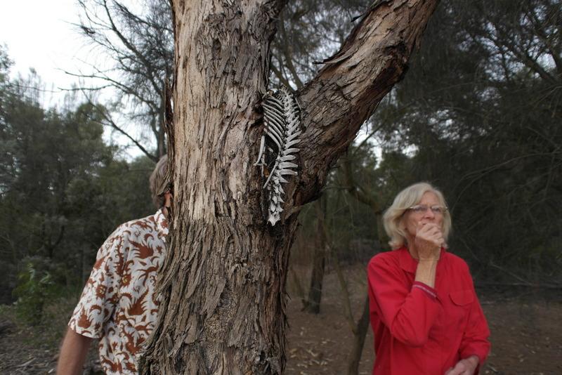 11-de-natuur-doet-verrassen-sketel-van-een-vos