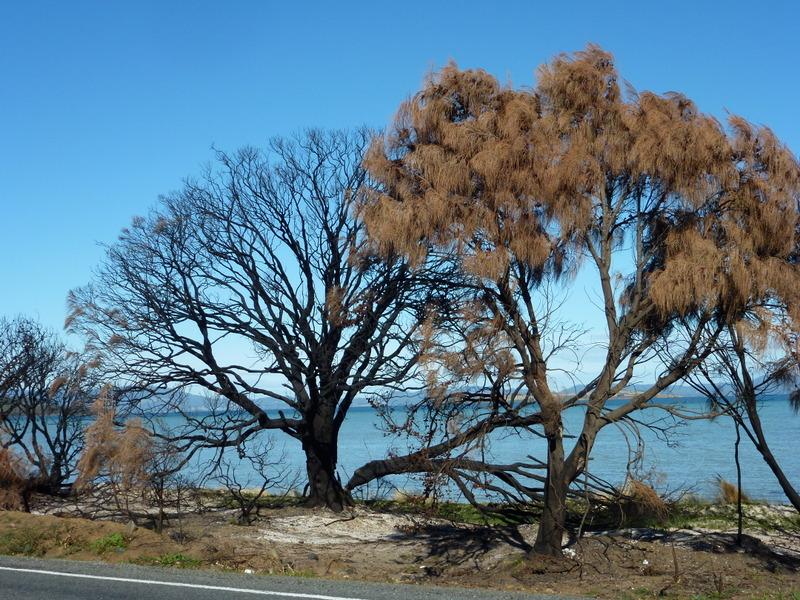 001-tasman-peninsula-op-weg-naar-port-arthur-begin-dit-jaar-2013-hevige-bosbranden