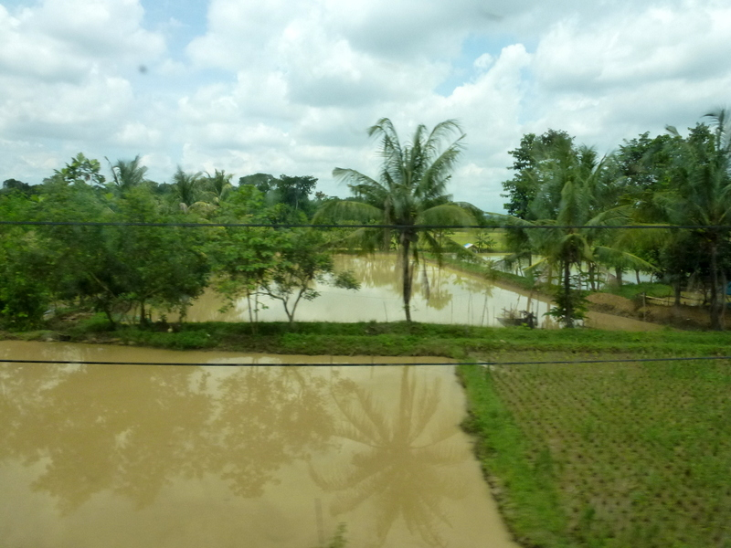 04-door-het-platteland-met-eindeloze-rijstvelden