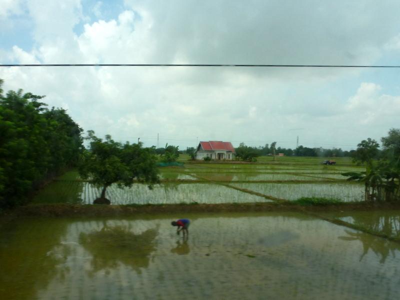 05-planten-van-rijst