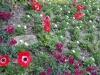 20-voorjaarsbloemen