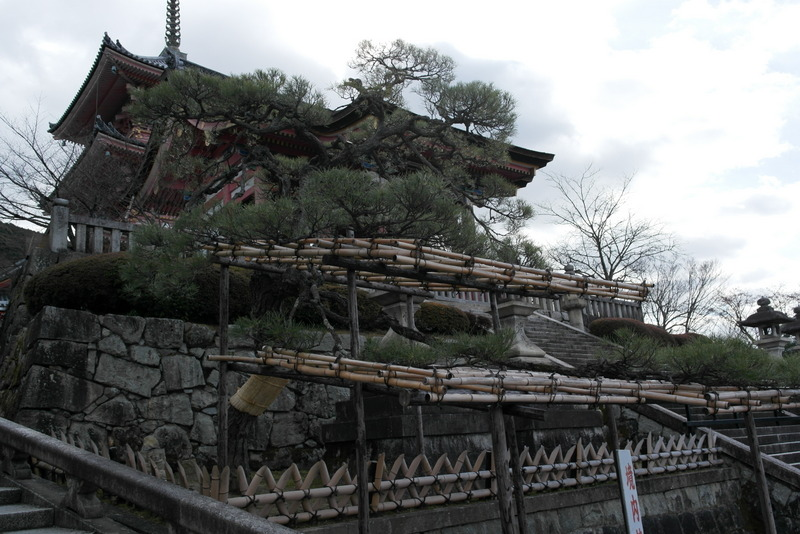 003-een-boom-japanser-kan-bijna-niet