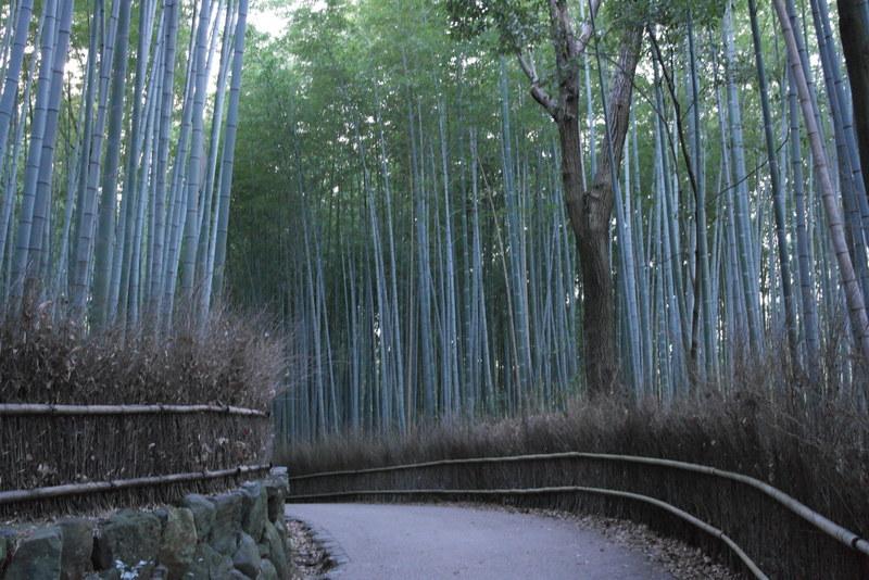 117-de-bamboo-grove