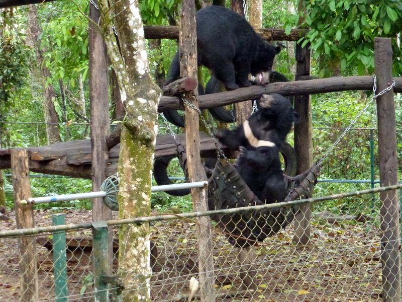 113-waar-deze-beren-zich-geen-mooier-verblijf-kunnen-voorstellen