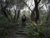 10-wandeling-door-cabbage-tree-bay-aquatic-reserve
