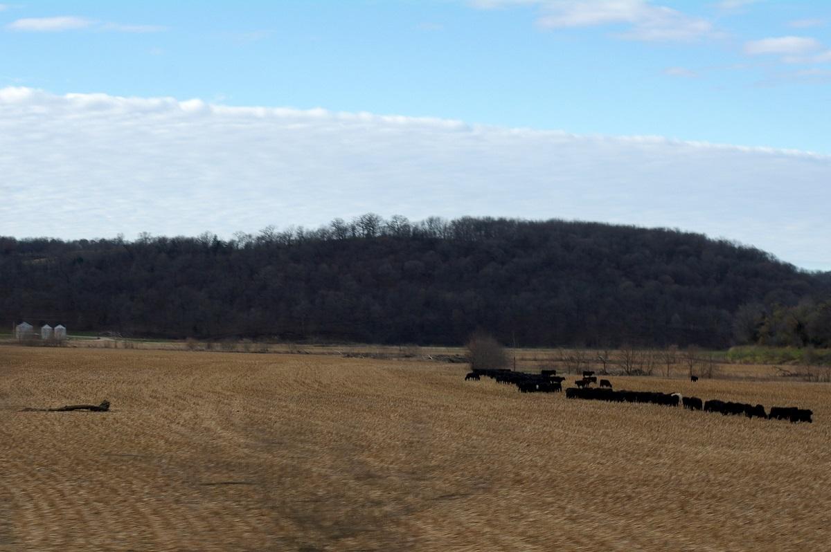 prachtig golvend landschap - weilanden en zwarte koeien - The Scenic Route - Illinois