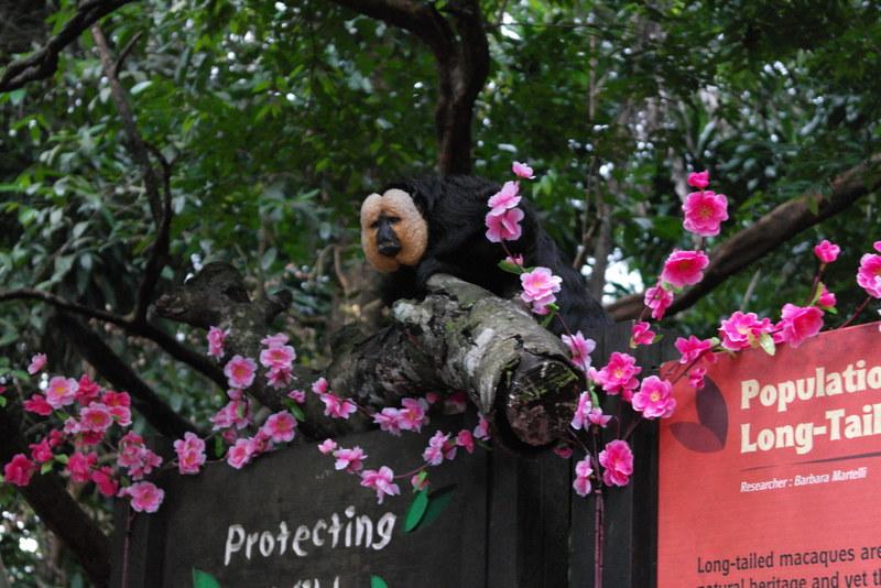 006-singapore-zoo-wie-kijkt-naar-wie