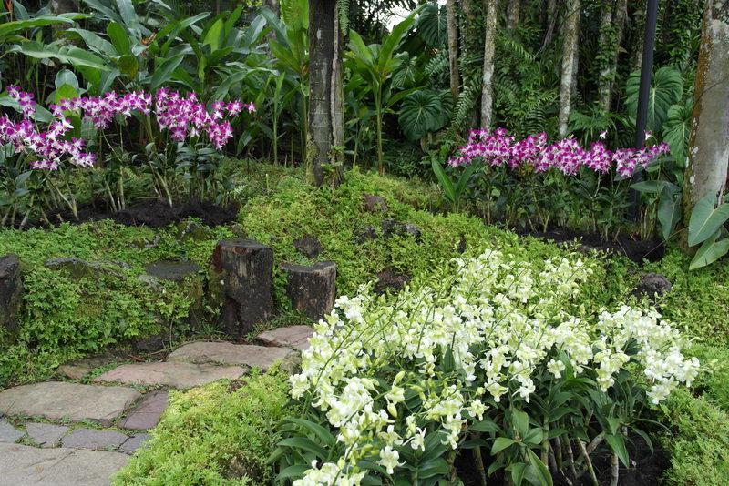 119-de-orchideen-tuin-oase-van-rust