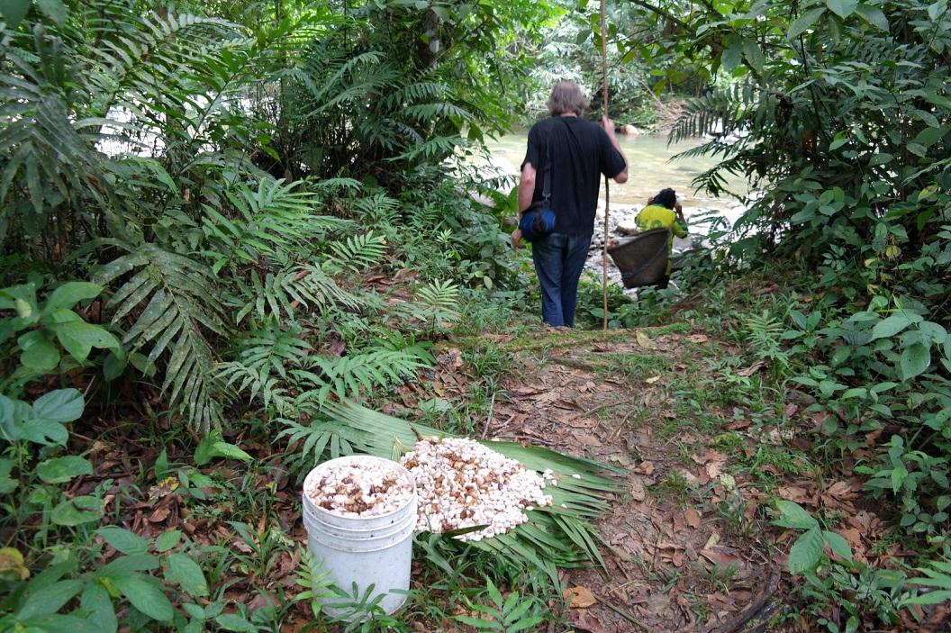 20 met een mand vol cacaobonen op terugweg naar huis