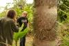 11 Chonta tree, een zeer harde, sterke houtsoort, zeer geschikt voor in de bouw, deuren, vloeren en meubels