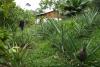 26 erf en tuin van Ana en Francisco