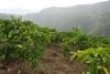 15 in de valleien rondom San Agustin, uitgestrekte velden met koffieplantages