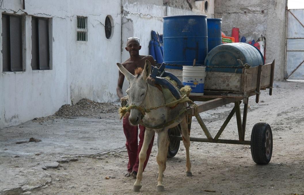 07 de lokale vuilnisman met zijn kar en ezel komt langs om het blad en bouwafval op te halen