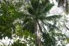 25 tropisch woud