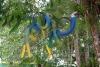 23 Kleurrijke vogels in het park rondom de Main Plaza