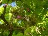 21 plantjes genesteld in een eikeboom