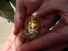 40 even van dichtbij bekijken, deze jonge schelpjes zijn leeg