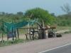 10 langs de weg verkoop van kleine cactusplantjes