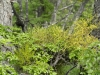begroeiing in het bos aan de oever van Lago Argentino