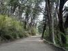 07 dichte bossen, op ca 30 km afstand van de grens met Chili