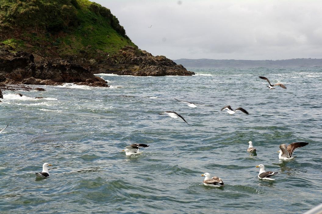 12 Aalscholvers en andere watervogels