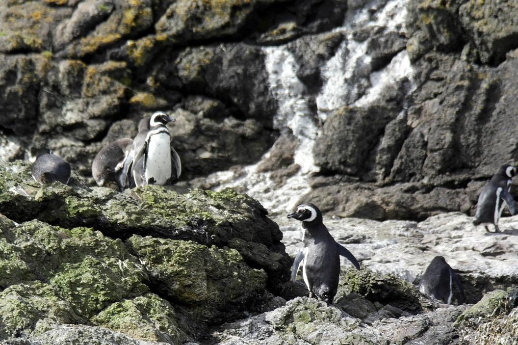 Pinguins op de uitkijk