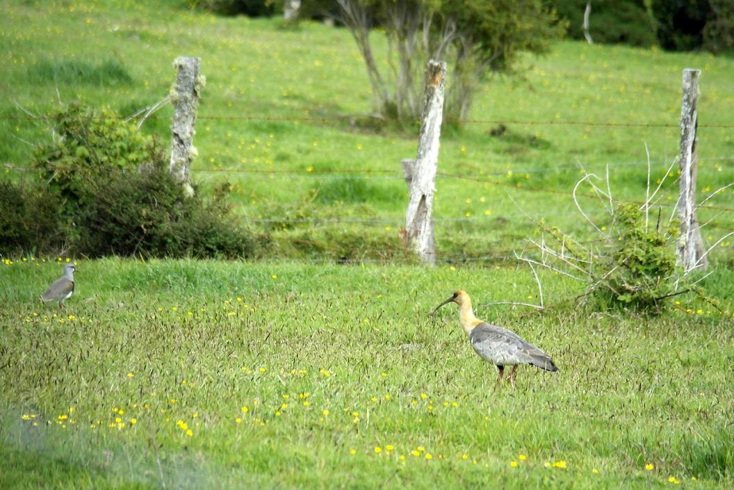 19 paardenbloemen en bijzondere weidevogels
