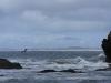 Pelikanen aan de horizon