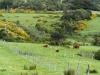 20 kleurrijke landelijke omgeving, op weg naar Castro