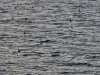 34 zeevogels waarvan Percy vertelde, eindeloos over het water scherend