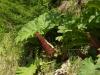 24 begroeiing langs de route en het meer,  Lago Llanquihue