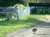 29 haasje wijst ons de weg naar boerderij - hostel Las Cascadas