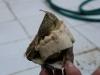 13 Picoroco - giant Barnacle, , Carla neemt alle tijd voor uitleg en laten zien de verschillende schaaldieren