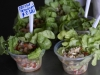 19 Ceviche ca Maren per bakje 2.500 CH Pesos (ca 3,50 Euro)