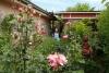 36 prachtige rozen en de achtertuin van het Broederhuis, met vele tuinkruiden en vruchten