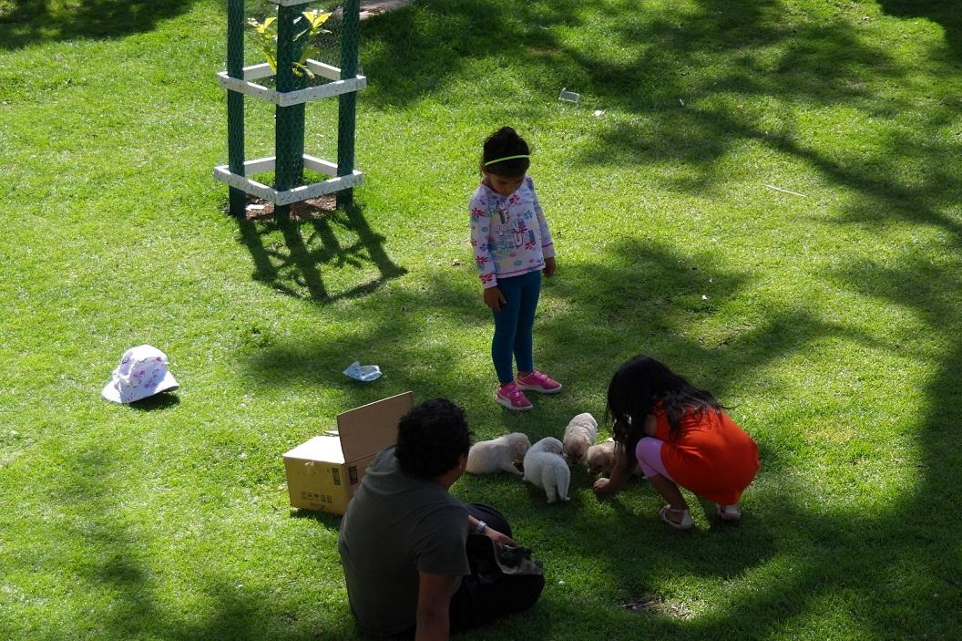 12 kinderen plezier met hun puppies, het Parque Bolivar een geliefde speelplek