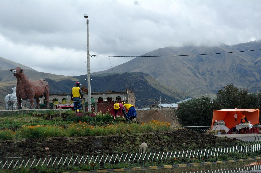 13 nieuwe aanplant op een rontonde - onderweg - van Juliaca naar Cuzco
