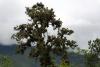 26 bomen prachtig begroeid