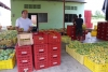 01 vanuit San Agustin, via Neiva op weg naar Medellin, een route met vele Mango boomgaarden, we maken een stop bij een boerderij waar men aan het sorteren is en kopen er onze lekkerste Mango's!