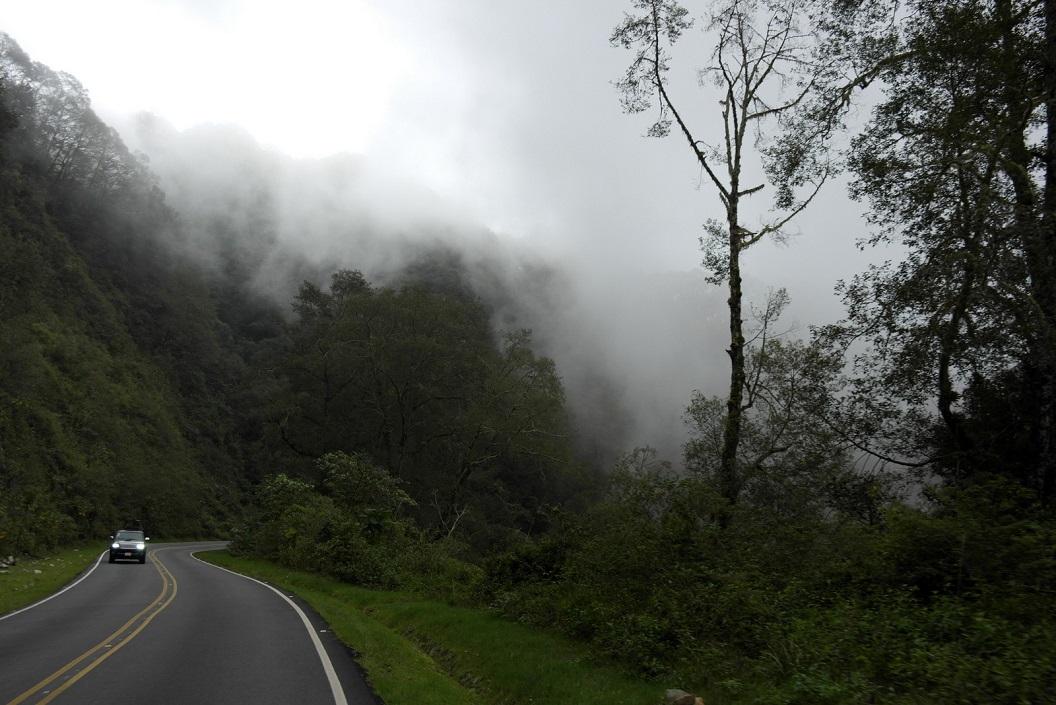 16 Cloud-Forrest nabij Parque Nacional Los Quetzales SAM_4687