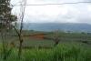 14 uitgestrekte ananas plantages, grootschaligheid tenkote van kleinschaligheid R 2- op weg naar San José SAM_4676