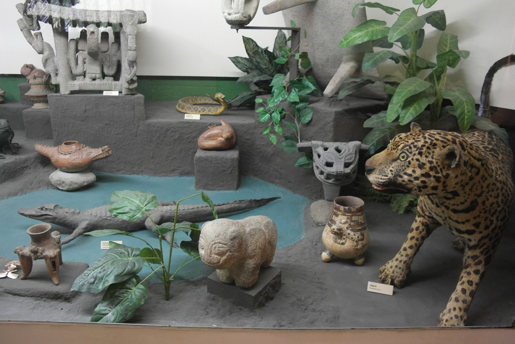 14 de Jaguar speelt een belangrijke rol in midden America ook symbolisch en een van de dieren die geen bedreiging zijn voor de mens SAM_4748