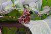 04 in de vlindertuin - Jardin de MariposasSAM_4752
